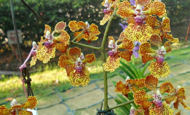 orkid putrajaya floria 2013