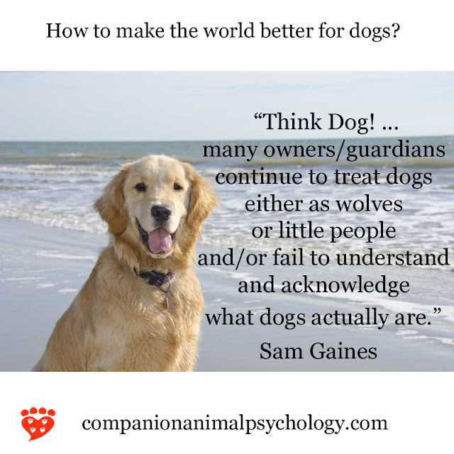 Think Dog! A Golden Retriever by the sea with a tip for how to make a better world for dogs