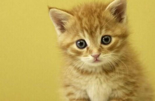 Cara Memelihara Kucing Dengan Baik