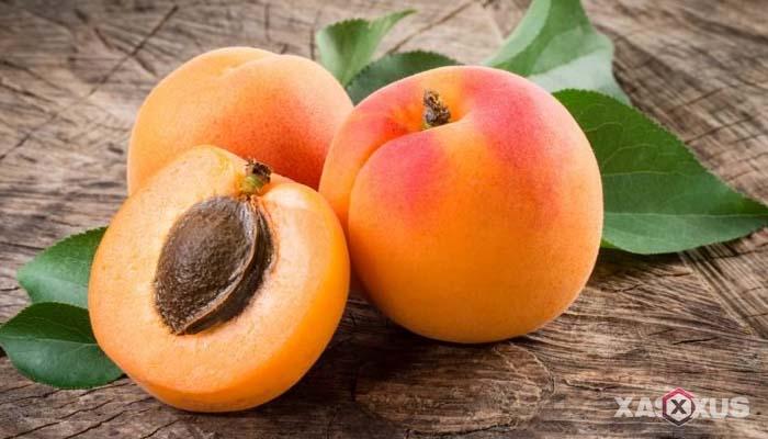 Buah penambah darah untuk penderita darah rendah - Aprikot