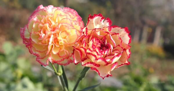 Tanaman Bunga Hias