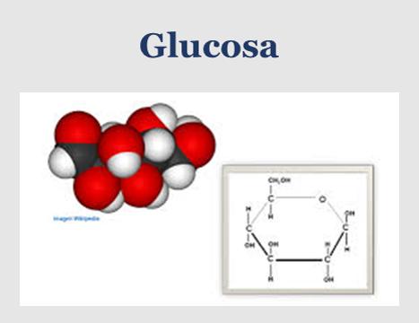 molécula de la glucosa