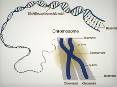Mutations Process in Chromosomes and Ordinary Chromosome before Change
