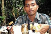 Bisnis Marmut Hias, Peternakan Alfian Widiantoro Menjadi Jujugan Pembelian Marmut Seluruh Indonesia