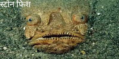 दुनिया की सबसे जहरीली मछली जो मिनटों में ले सकती हैं किसी की भी जान,जानिए