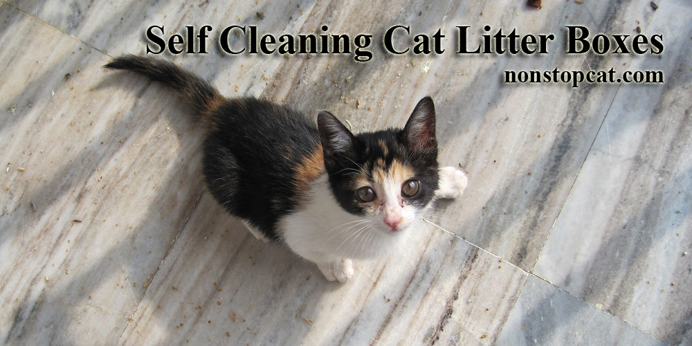 The Cautions Of Methimazole For Cats
