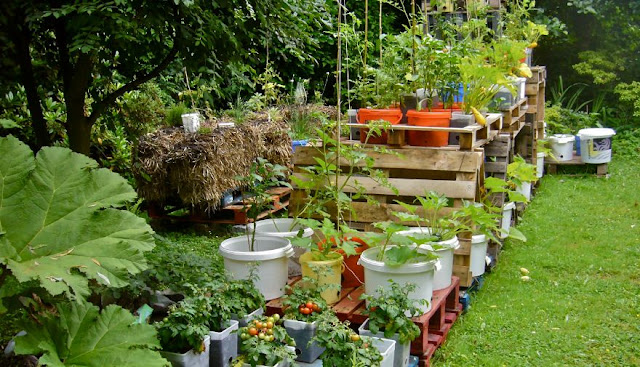 5 Quick Gardening recommendations to save your money