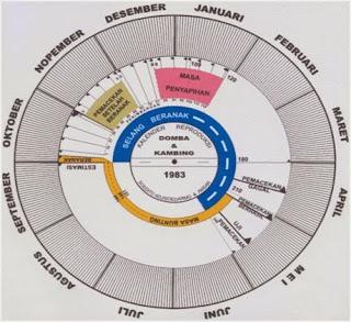 kalender masa hamil atau bunting pada domba kambing
