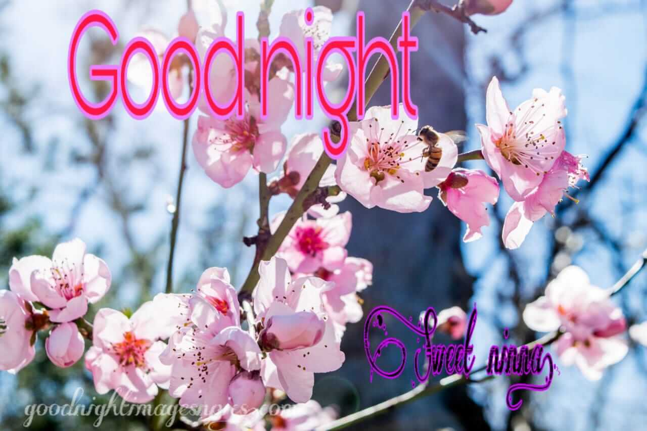 Good Night Images To Download