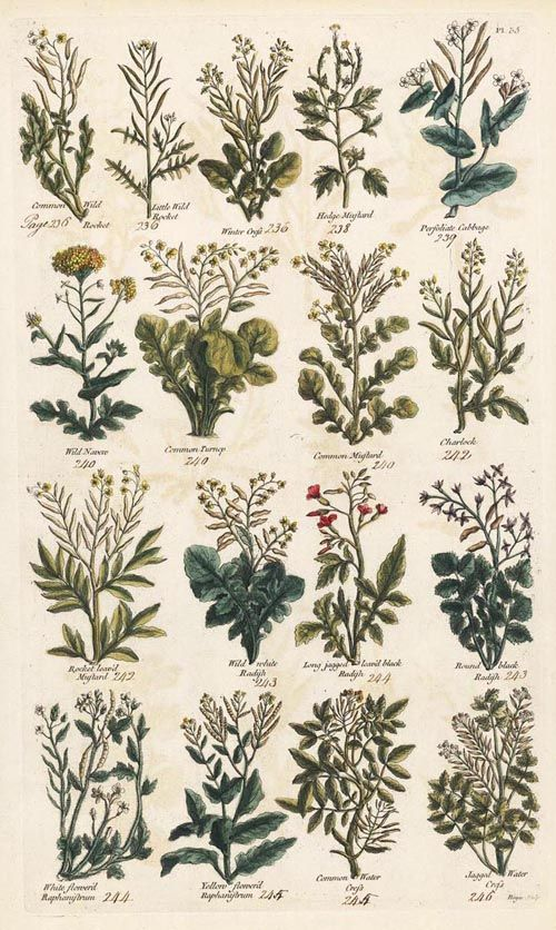 pictures of vintage herb gardens | A Woodsrunner's Diary: 18th Century Herb Use.