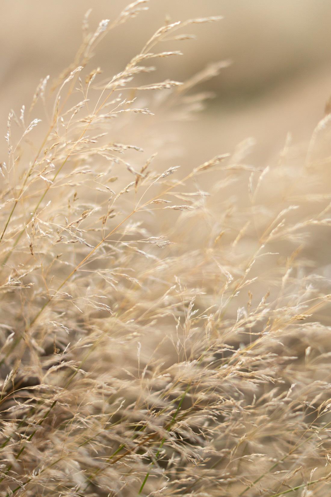 Summer-fields-cottagecore-lifestyle