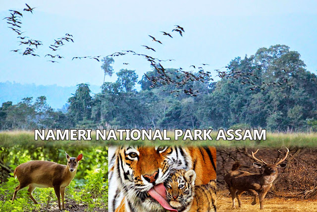 national park in assam