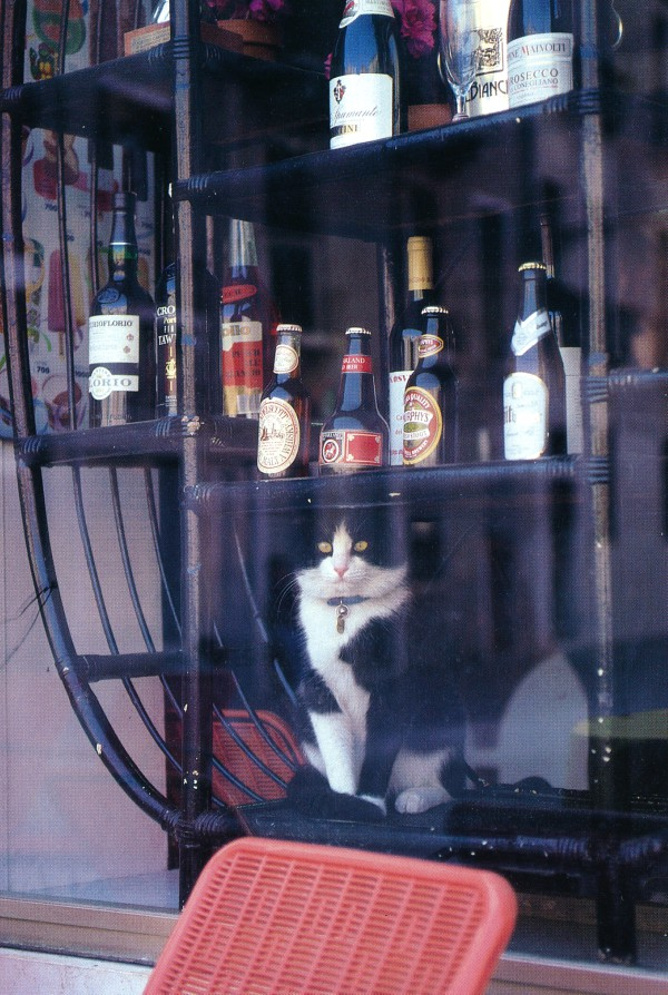 Liquor store cat of Venice