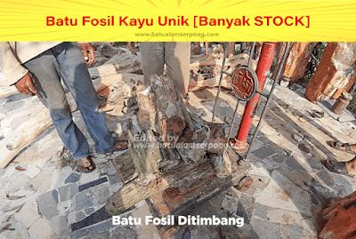 batu fosil kayu ulin