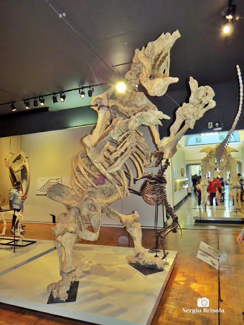 Close-up da réplica do esqueleto de uma Preguiça-gigante - Museu de Zoologia da USP - Ipiranga - São Paulo