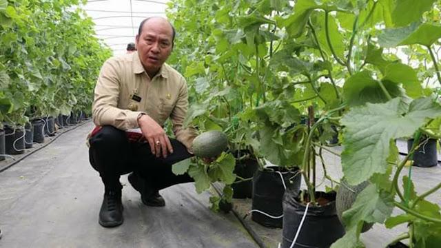 Bupati Taput Tinjau Lahan Pertanian Hidroponik Sayur Mayur dan Budi Daya Jeruk