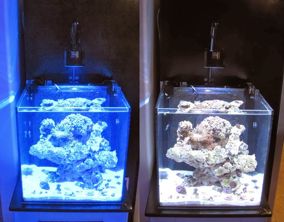 Product Review Kessil A360we Led Aquarium Light The