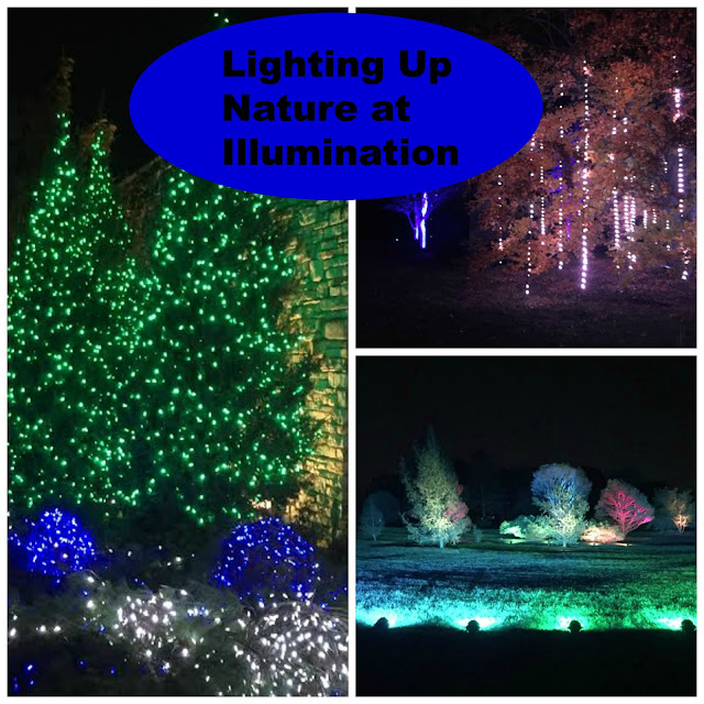 Illumination at The Morton Arboretum is an innovative light show melding holiday lights with nature.