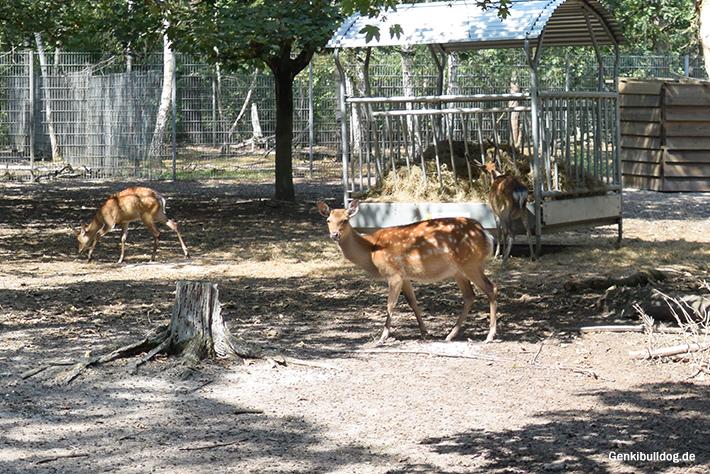 Tierpark Walldorf