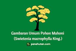 Gambaran Umum Pohon Mahoni (Swietenia macrophylla King.)