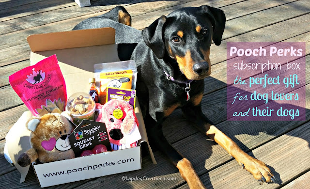 doberman mix rescue dog with pooch perks box