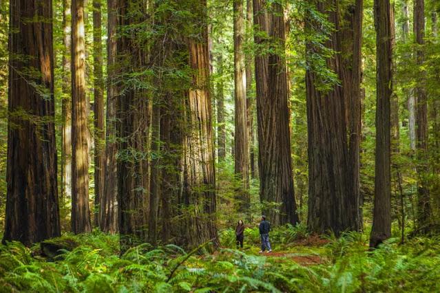 Memahami Ekosistem Hutan dan Keanekaragaman Hayati