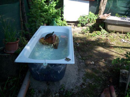 Mondo dei rettili idee pazze per acquaterrario for Tartarughe grandi