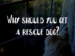 Why should you get a rescue dog?