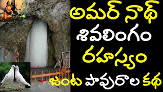 amarnath cave mystery | amarnath real pigeon story