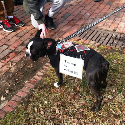"Cute Little Doggie Wearing ""Trump is rabid!!!""  protest sign at the Boston Women's March"