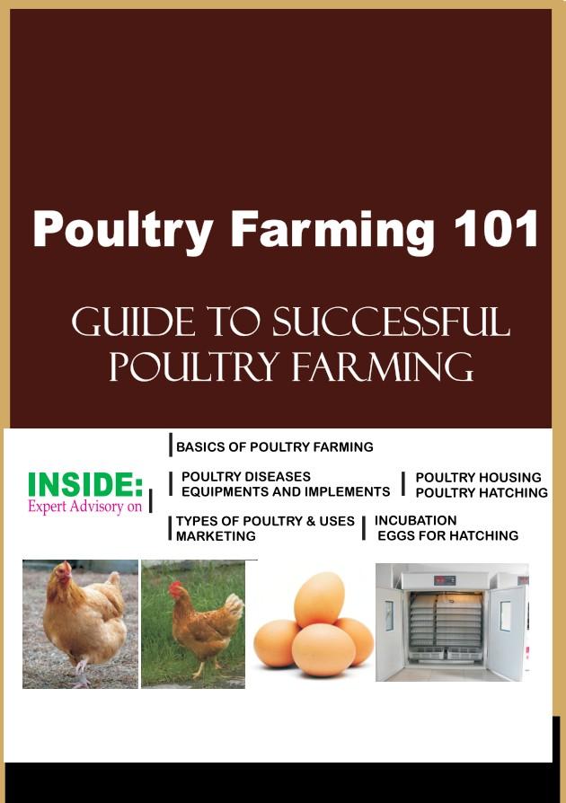 Poultry farming 101