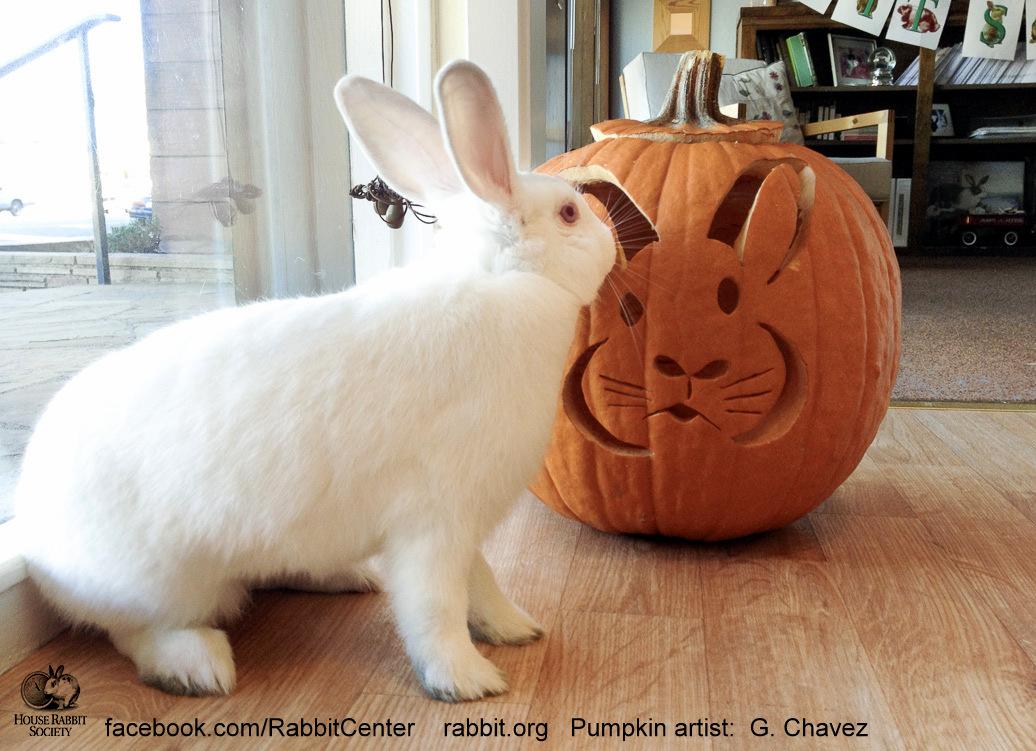Rabbit Ramblings October 2018