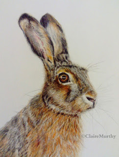 Drawing Hares and other Wildlife. Sussex, London, Surrey, Kent.