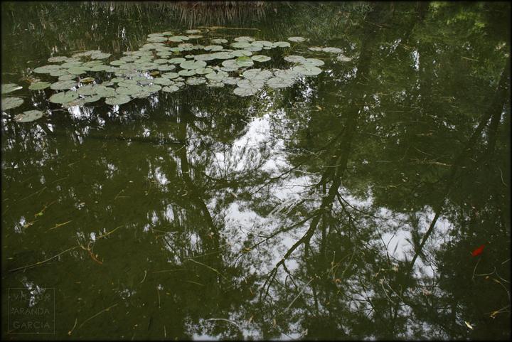 fotografia,naturaleza,valencia,jardin,monforte,reflejo,arboles