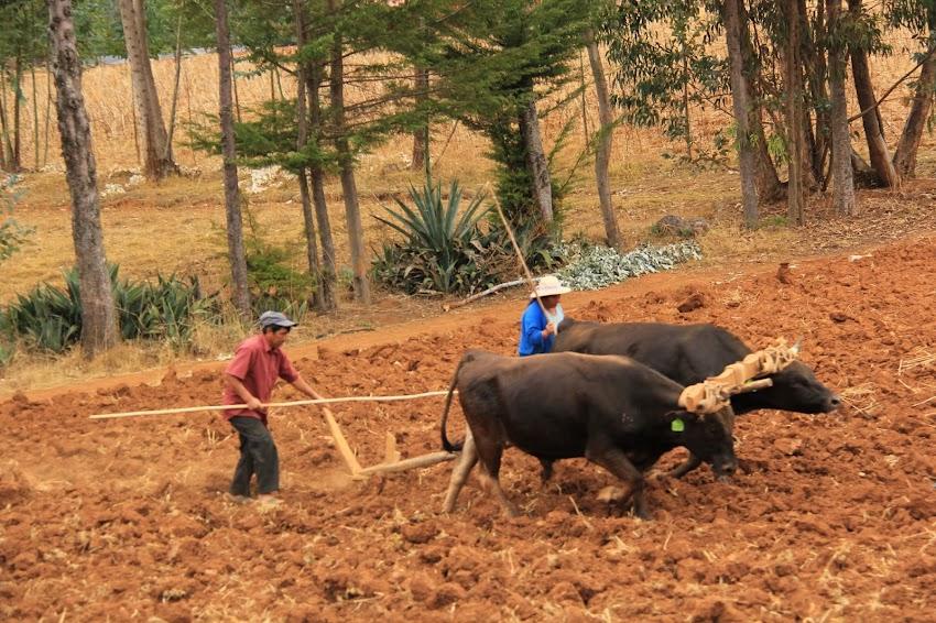 Presentan plan de reactivación económica con apertura de ferias agropecuarias en provincias de Cajamarca