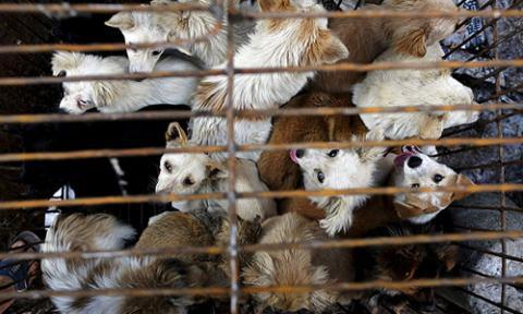 Tổ chức bảo vệ động vật toàn cầu đề nghị Việt Nam cấm giết mổ, tiêu thụ thịt chó, mèo