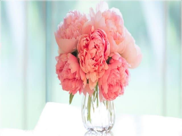 صور ورد - خلفيات ورد 2 | Flowers Photos - Roses wallpapers 2