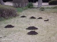 Molehills in the Tokyo Imperial Gardens, Japan