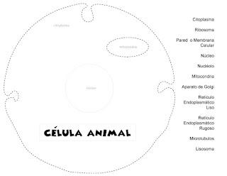 celula animal maqueta
