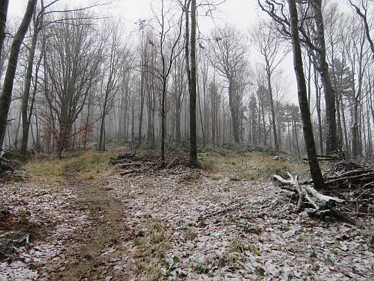 Pierwsze śnieżynki zabielające las.