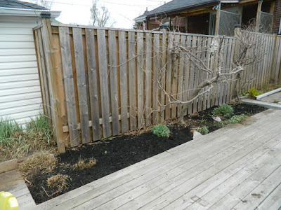 Toronto Birch Cliff spring garden cleanup after Paul Jung Gardening Services
