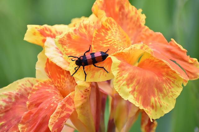 yellow Flower image