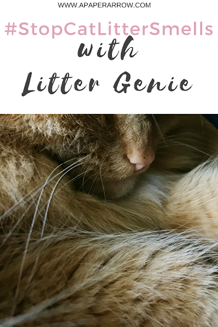 cats, litter genie, #stopcatlittersmells, brandbacker, sponsored