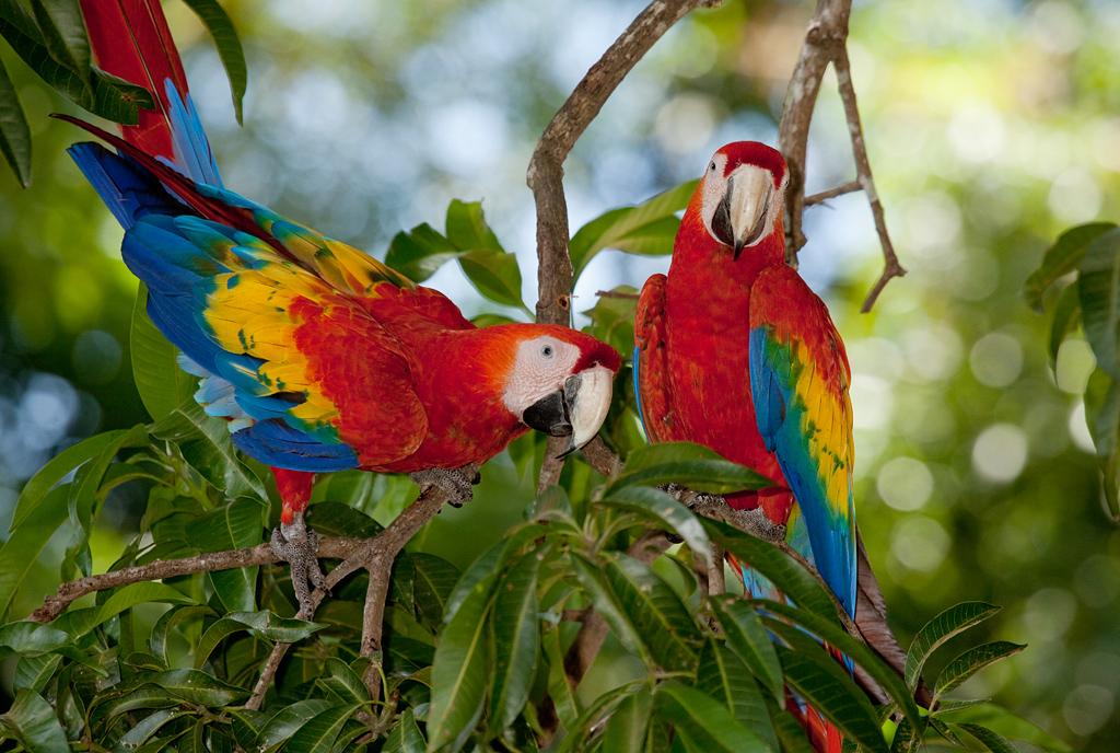 Попугаи в национальном парке Канайма