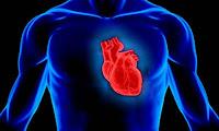 Μελέτη σοκ: Ο κορoνοϊός «χτυπάει» όλα τα αγγεία του ανθρώπου