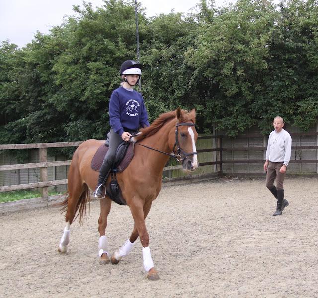 half halt, horse riding, dressage training,