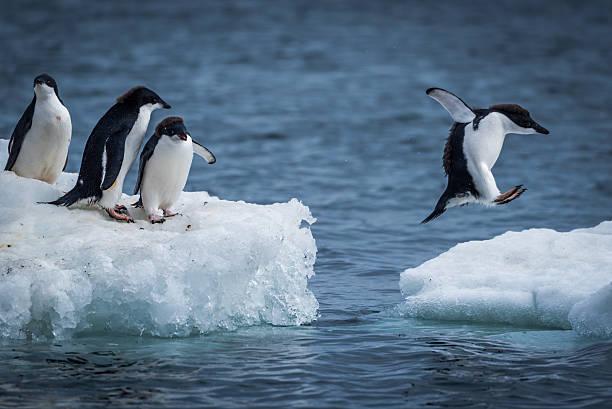 gambar burung pinguin - catatanadi.com