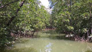 Indocement: Kini Hutan Mangrove Langadai Bernilai Ekonomis