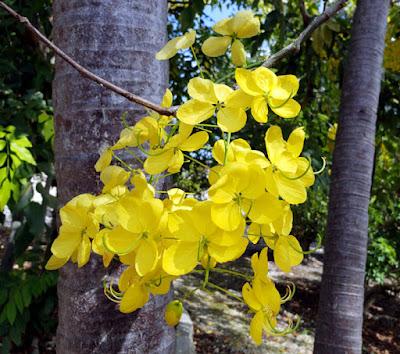 Beautiful hanging yellow flowers
