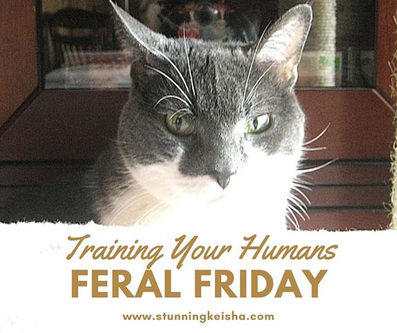 Feral Friday: Training Your Humans